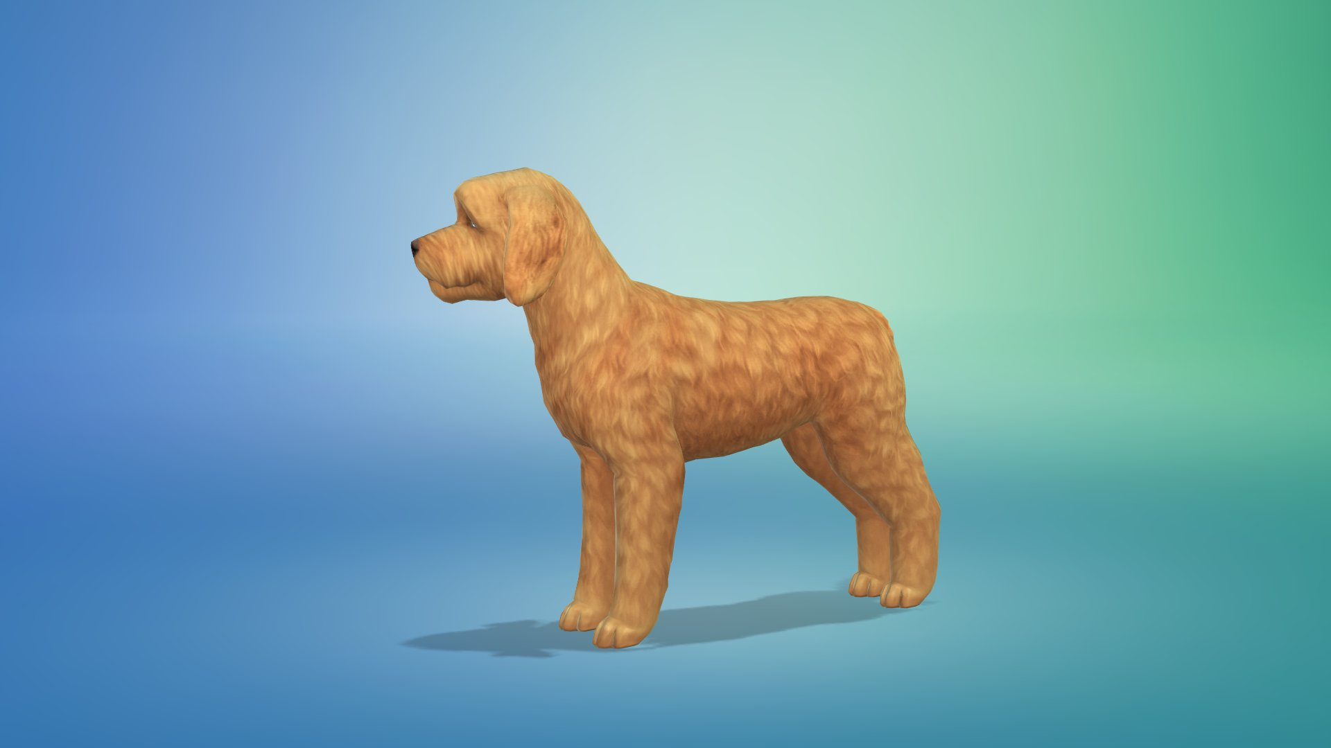Cockapoo Sims  Cats And Dogs