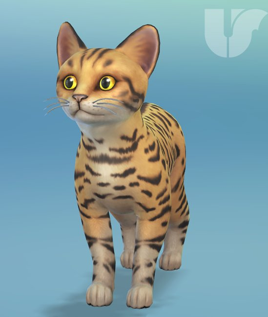 Origin Sims  Cats And Dogs  Off Sale