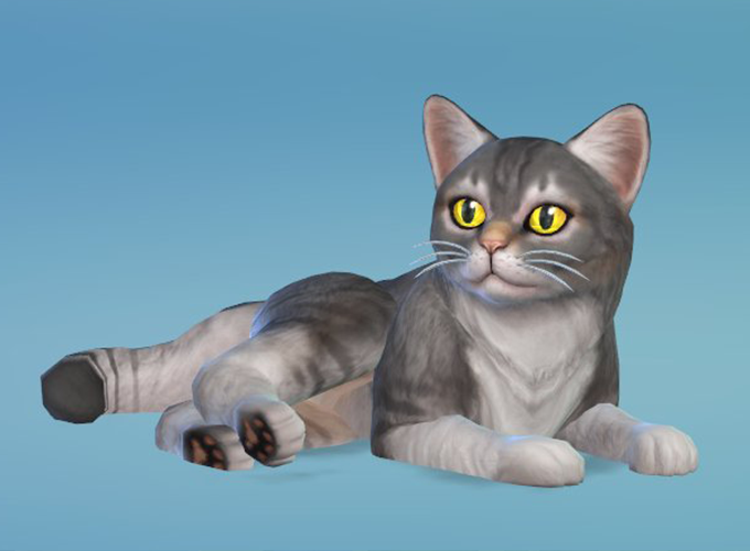 Cats And Dogs Adoption Sims
